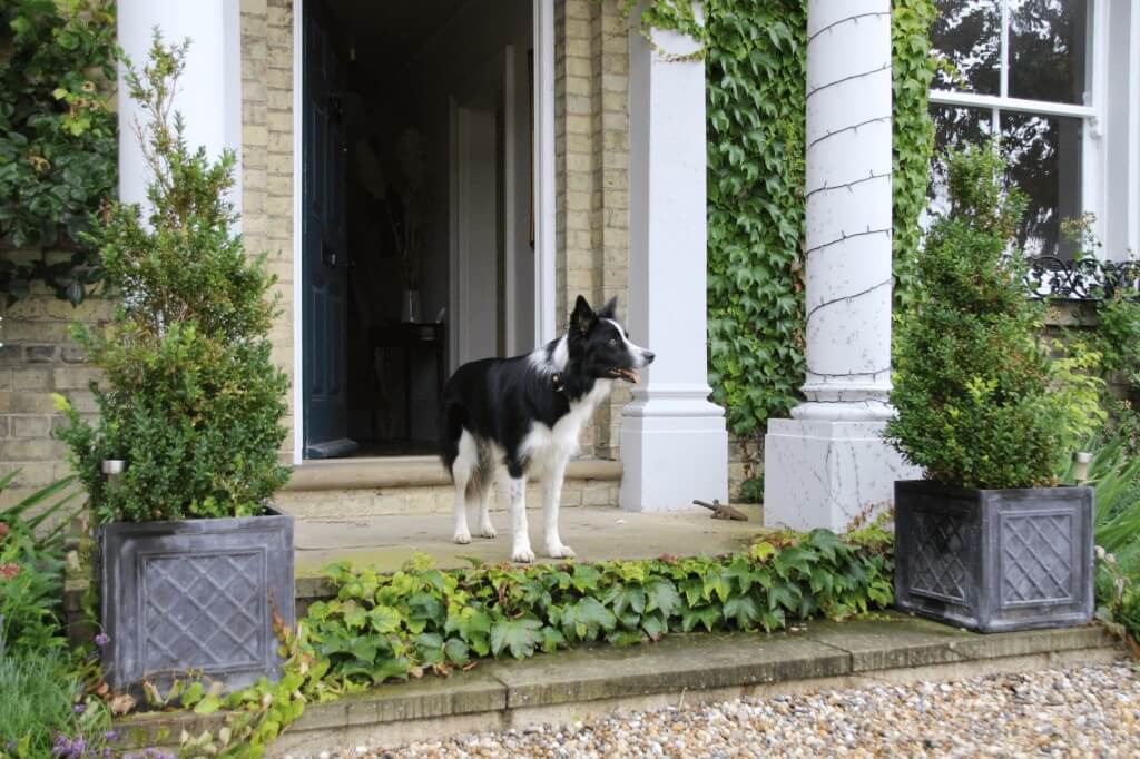 Border Collie stood outside entrance to a house
