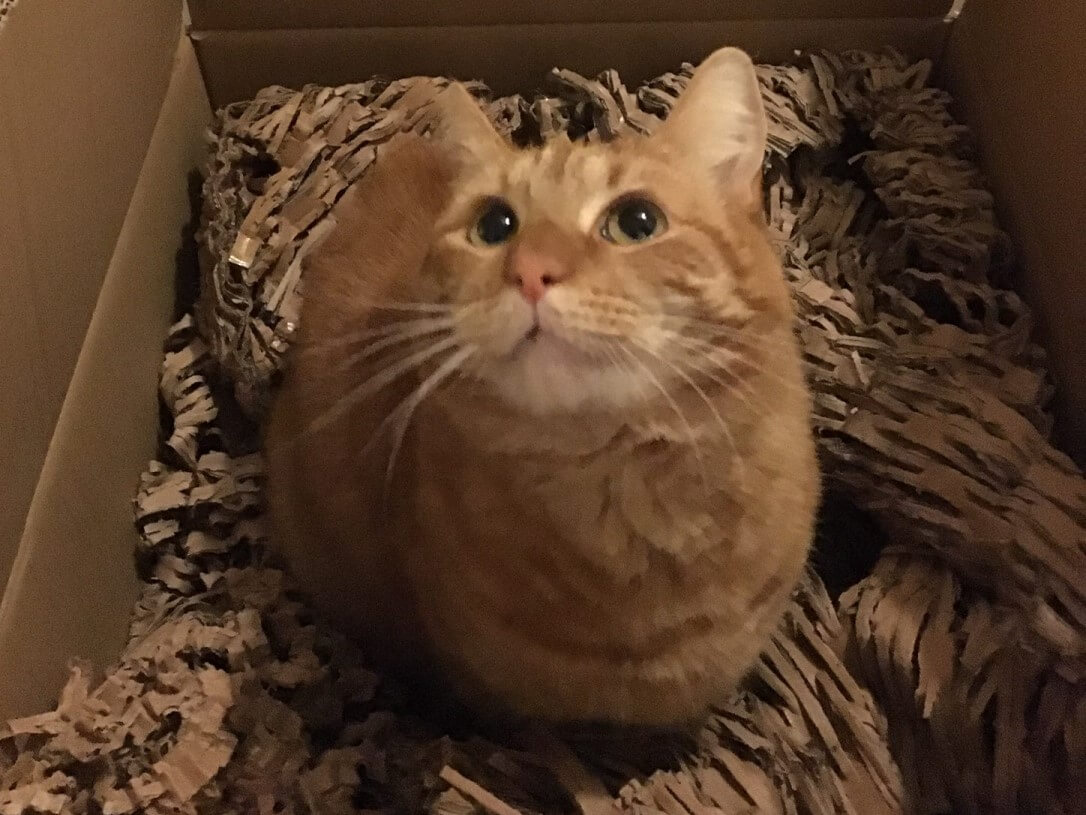 Ginger cat sitting in a box