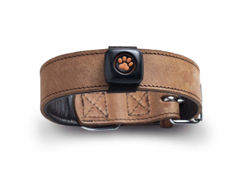 PitPat on a collar