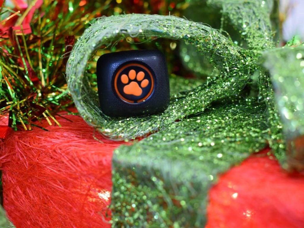 PitPat on top of Christmas present