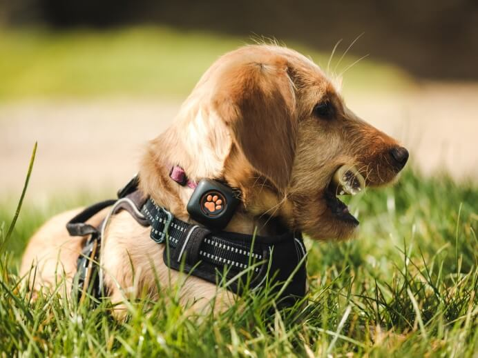 puppy in grass with bone in mouth