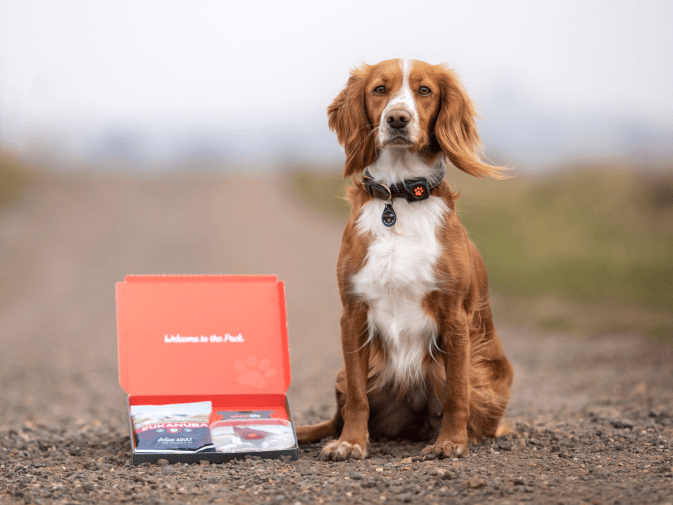 Sprocker sat with PitPat packaging